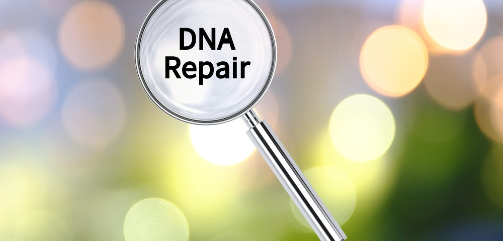 DNA Repair Genes May Predict Response to Chemotherapy in Mesothelioma Patients, Study Finds